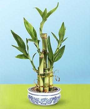 http://www.plantasyjardines.es/wp-content/uploads/2009/09/bambu.jpeg