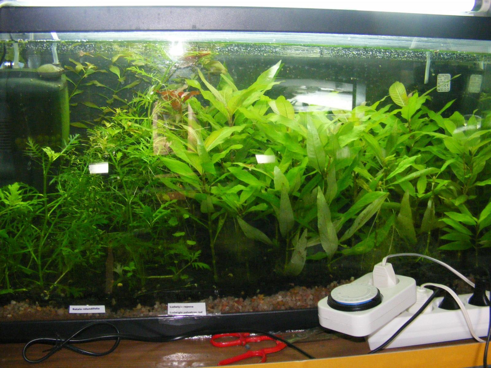 Abono para plantas acu ticas casero o comprado plantas for Todo para acuarios