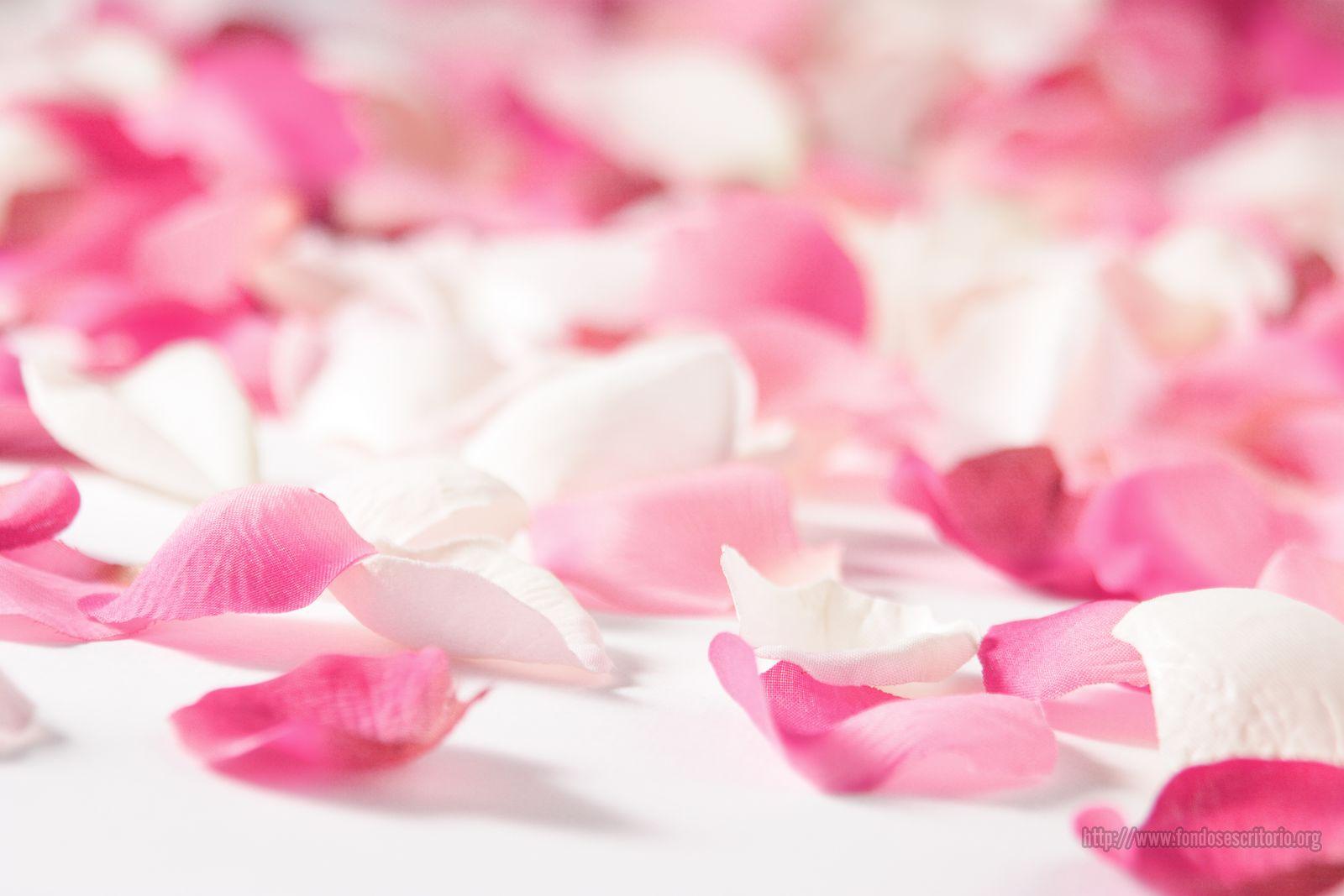 Wall Paper Wide Pink Rose Colours Soft Nature Flower: Plantas De Interior Y Exterior