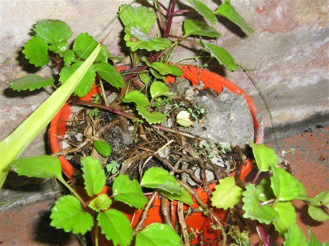 Eliminar la cal del jard n y plantas plantas de interior for Eliminar hormigas del jardin