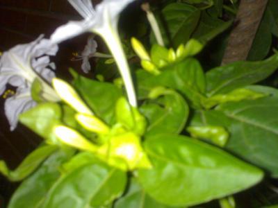 las plantas m s olorosas plantas de interior y exterior