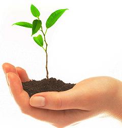 Reflejos de luz semillas de vida for Plantar hortensias semillas