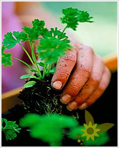 C mo eliminar las malas hierbas plantas de interior y for Como quitar la mala hierba del jardin