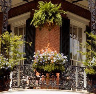 Consejos para plantas en balcones plantas de interior y for Plantas para balcones
