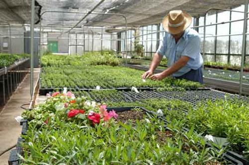 Opciones en jardiner a plantas de interior y exterior for Viveros arboles ornamentales