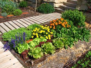 C mo cultivar hortalizas en invierno plantas de interior for Como cultivar hortalizas