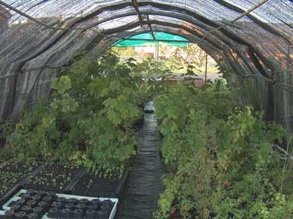 Consejos para buenos viveros plantas de interior y for Plan de negocios de un vivero de plantas