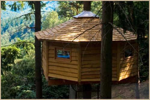 Casas en los rboles plantas de interior y exterior for Hotel con casas colgadas de los arboles