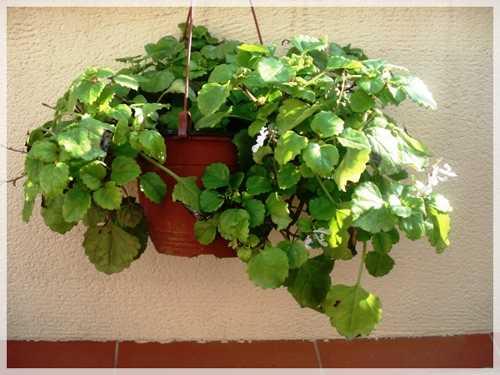 Plantas De Exterior De Invierno Contenido Relacionado