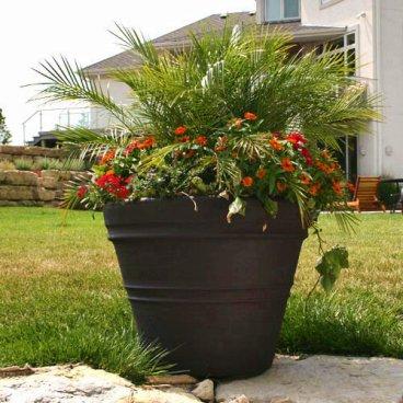 Una maceta con varias plantas plantas de interior y for Varias plantas en una maceta