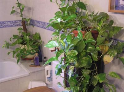Plantas para ba os plantas de interior y exterior - Plantas para banos ...