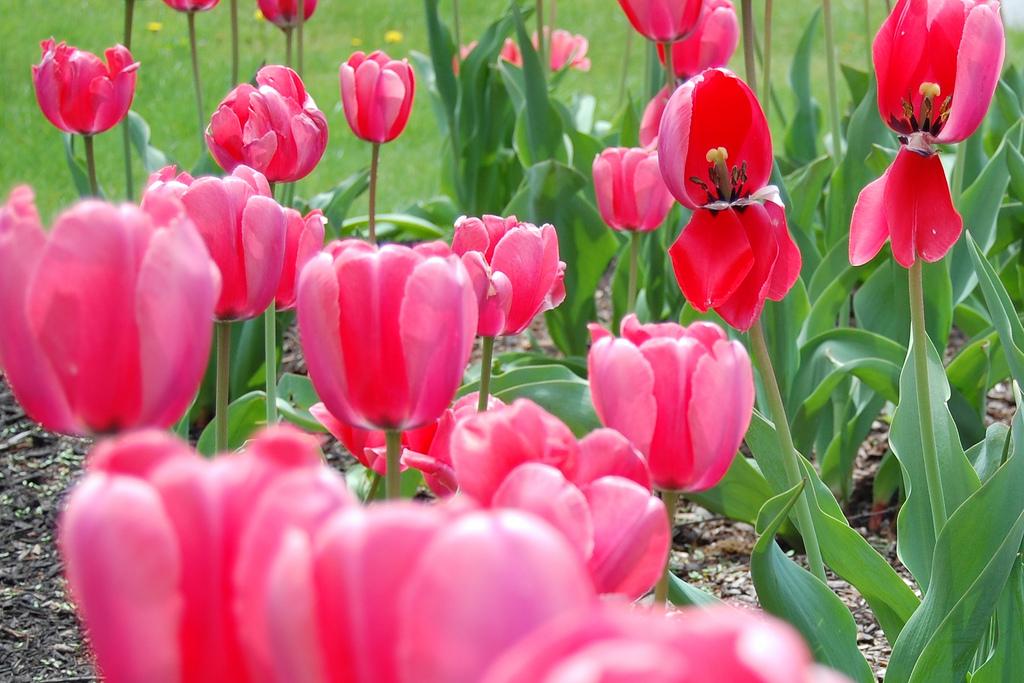 Succulents Home Pinterest Plantas Y Jard N - Vitaminas Para Plantas ...