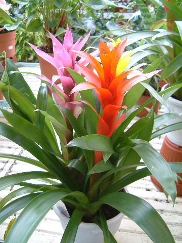 inicio exportacion flor exotica colombia: