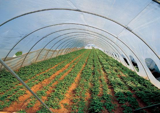 Los invernaderos y sus tipos plantas de interior y for Que son cultivos asociados