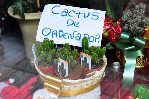 Cactus contra radiaciones mito o realidad plantas de - Informacion sobre los cactus ...