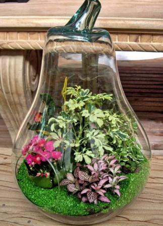 Plantas en terrario